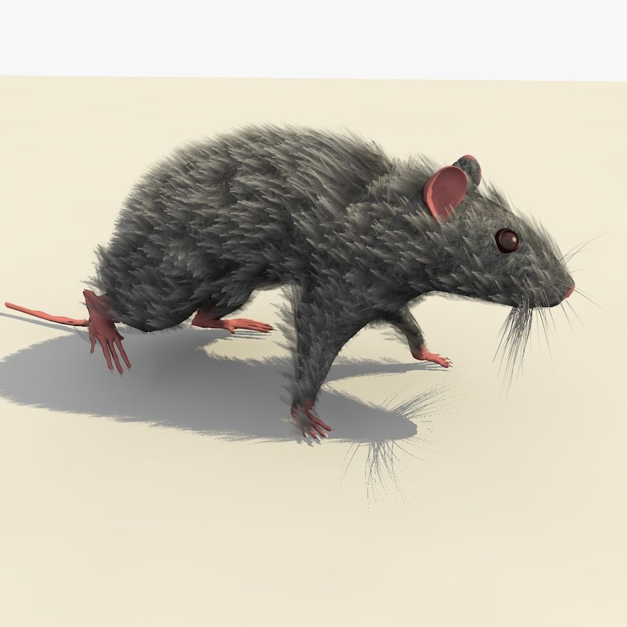 Animated Grey Walking Mouse royalty-free 3d model - Preview no. 6