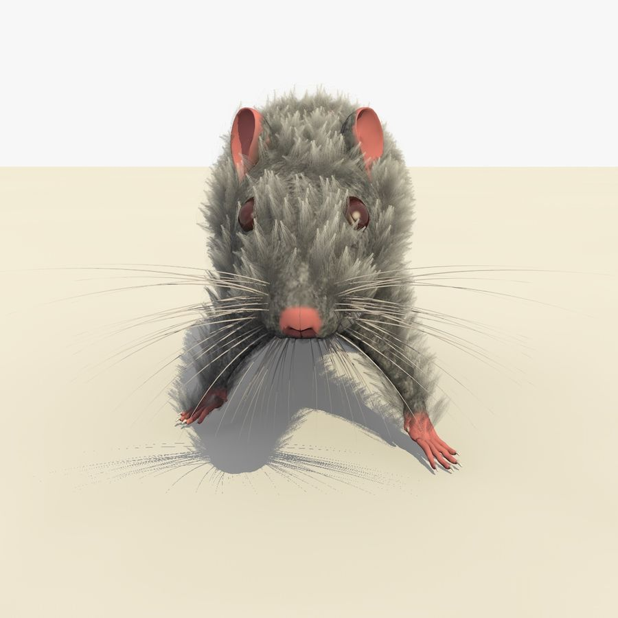 Animated Grey Walking Mouse royalty-free 3d model - Preview no. 8