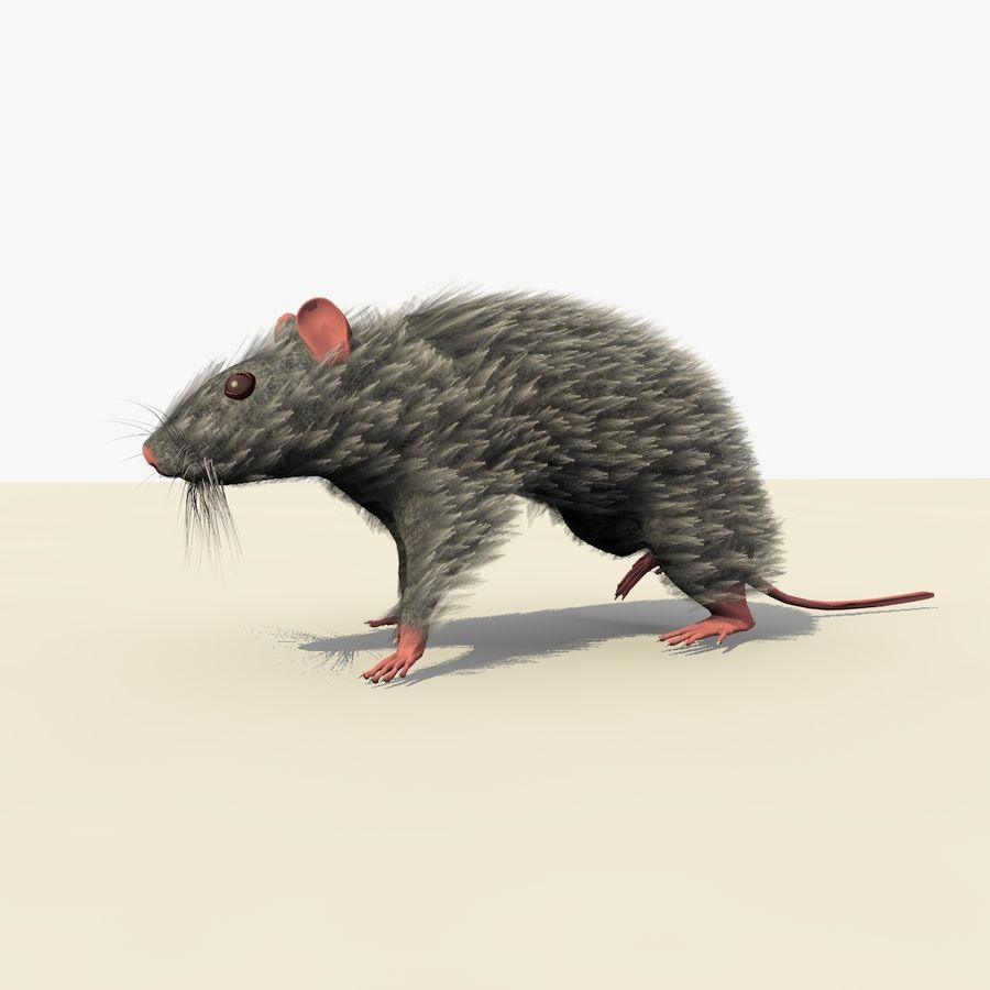 Animated Grey Walking Mouse royalty-free 3d model - Preview no. 2