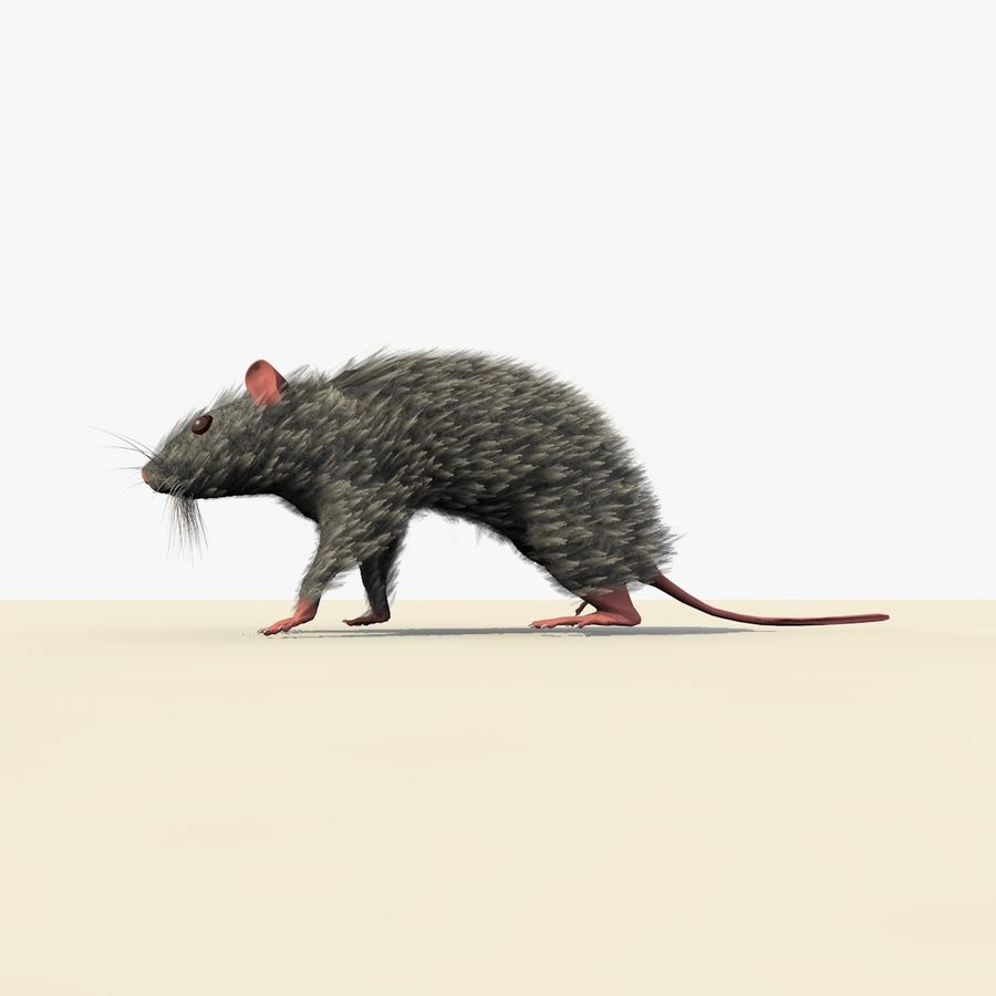Animated Grey Walking Mouse royalty-free 3d model - Preview no. 3