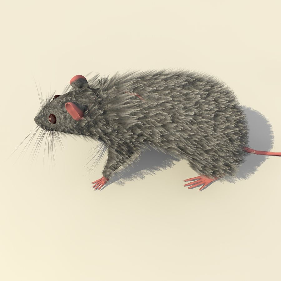 Animated Grey Walking Mouse royalty-free 3d model - Preview no. 7