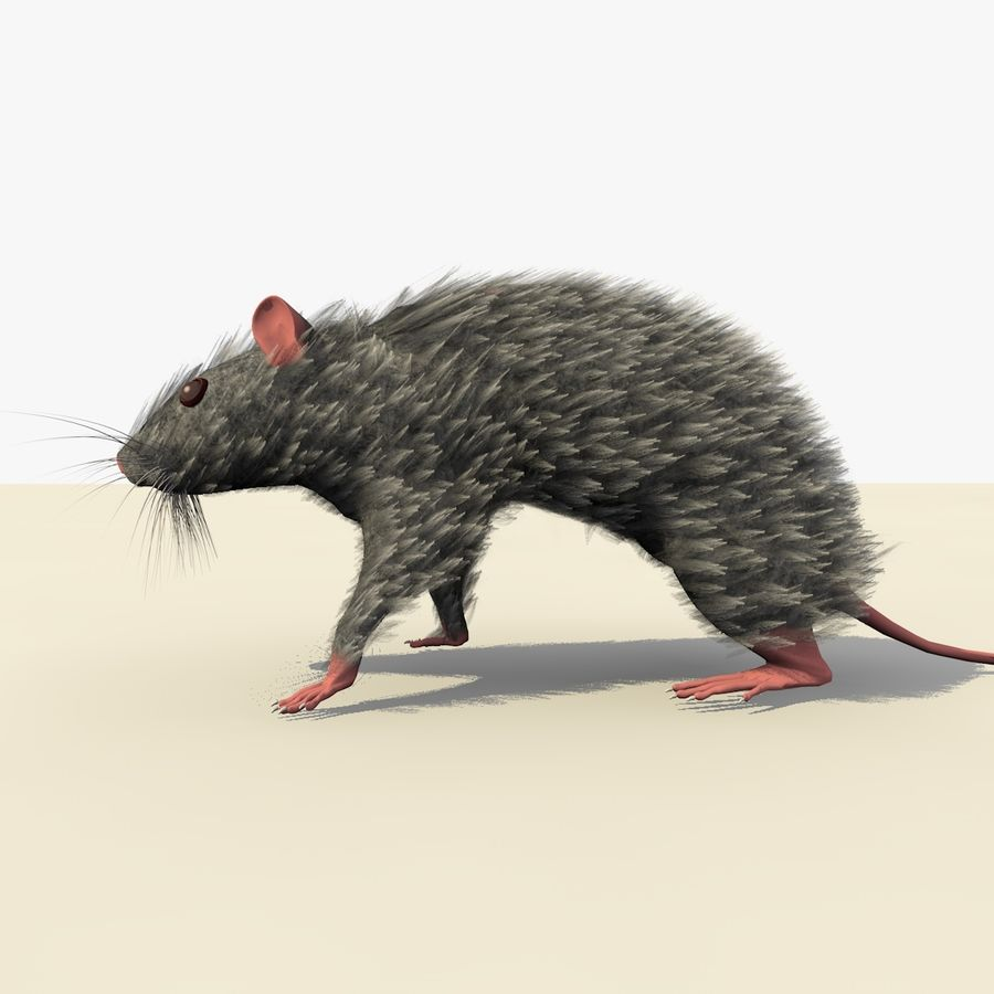 Animated Grey Walking Mouse royalty-free 3d model - Preview no. 4