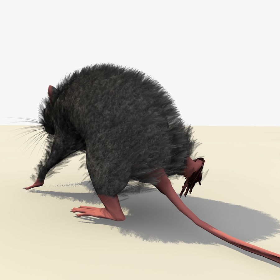 Animated Grey Walking Mouse royalty-free 3d model - Preview no. 5