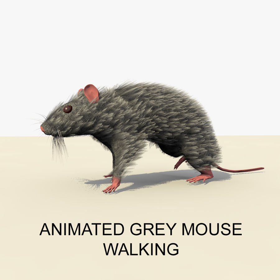 Animated Grey Walking Mouse royalty-free 3d model - Preview no. 1