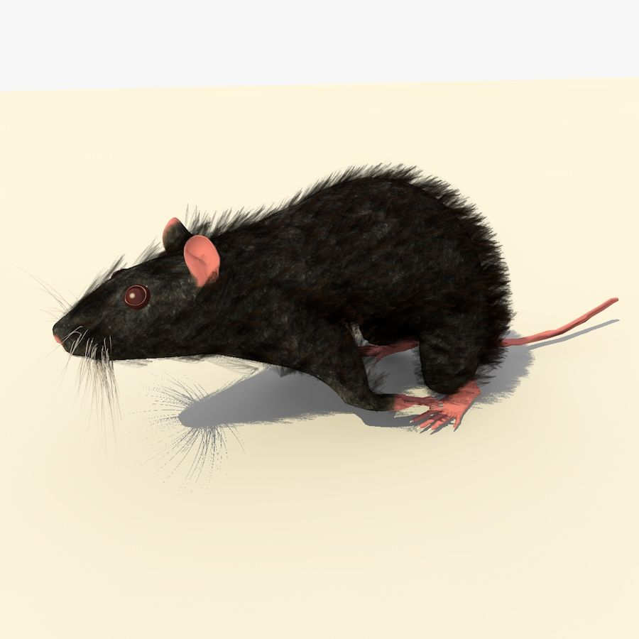 Animated Running Black Mouse royalty-free 3d model - Preview no. 4