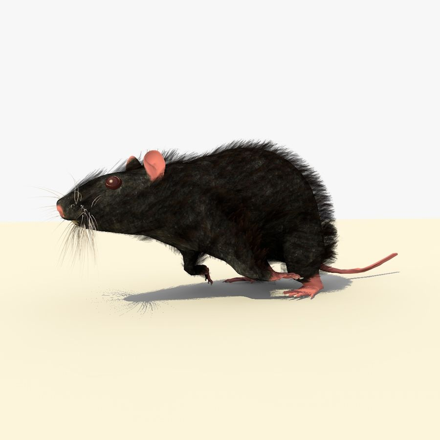 Animated Running Black Mouse royalty-free 3d model - Preview no. 3