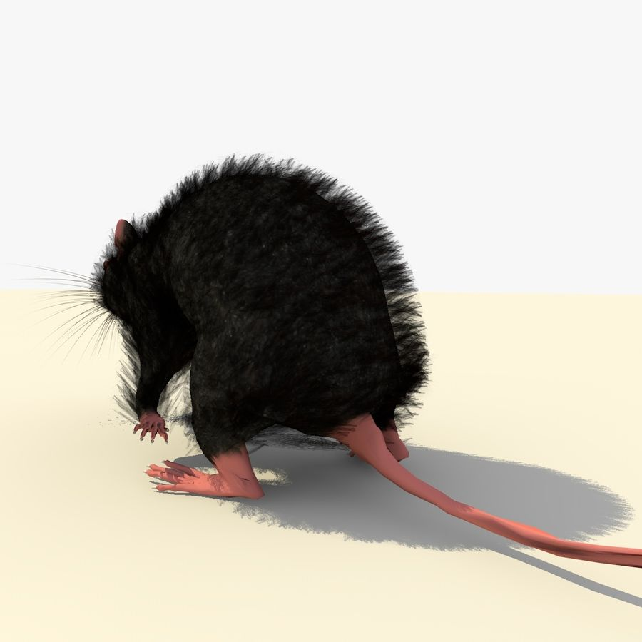 Animated Running Black Mouse royalty-free 3d model - Preview no. 5