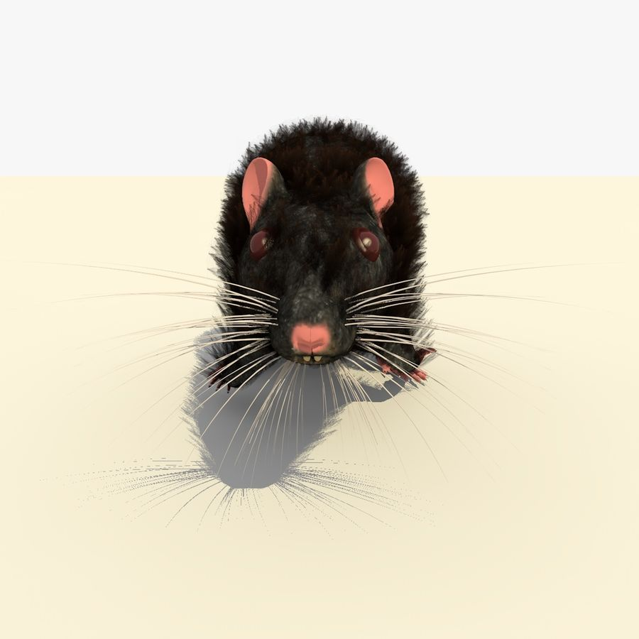 Animated Running Black Mouse royalty-free 3d model - Preview no. 7