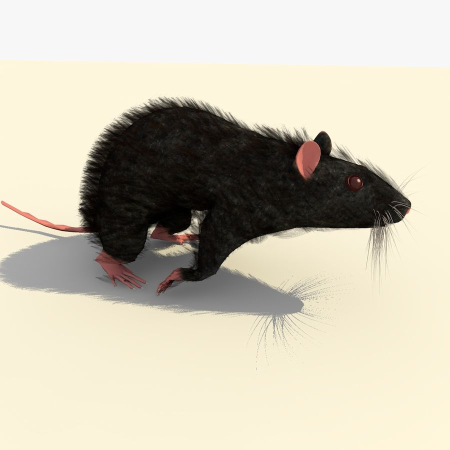 Animated Running Black Mouse royalty-free 3d model - Preview no. 6
