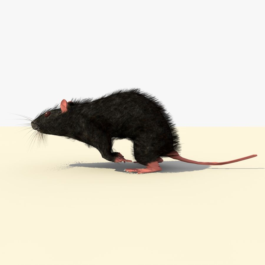 Animated Running Black Mouse royalty-free 3d model - Preview no. 2