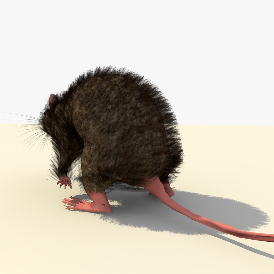Animated Running Brown Mouse royalty-free 3d model - Preview no. 5