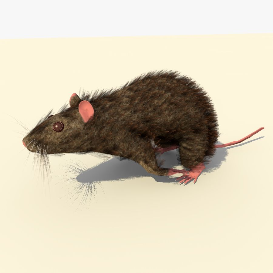 Animated Running Brown Mouse royalty-free 3d model - Preview no. 4