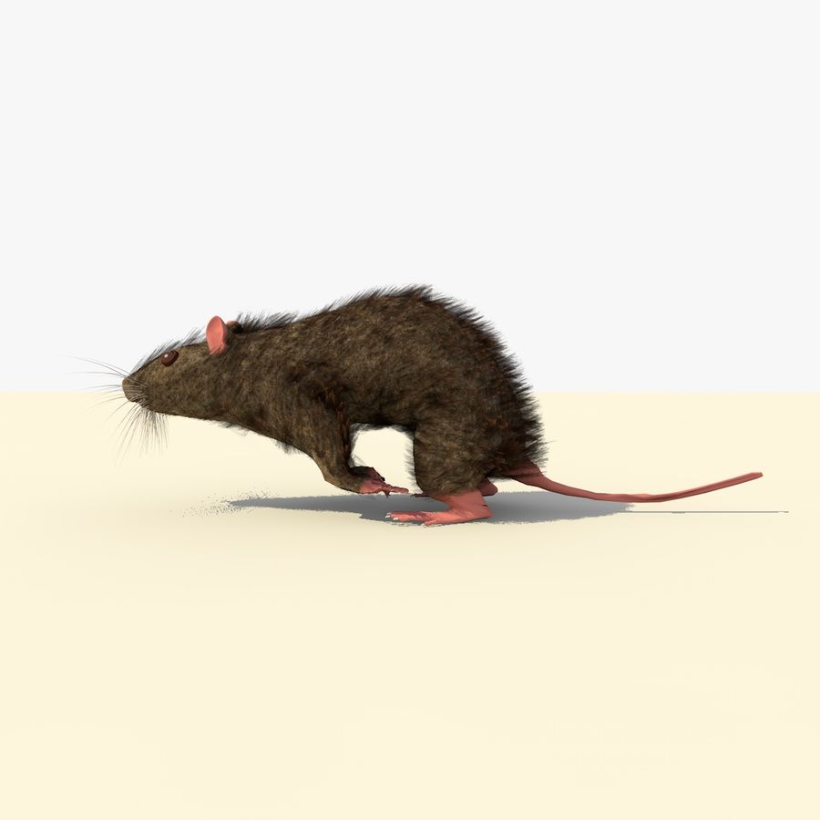 Animated Running Brown Mouse royalty-free 3d model - Preview no. 2