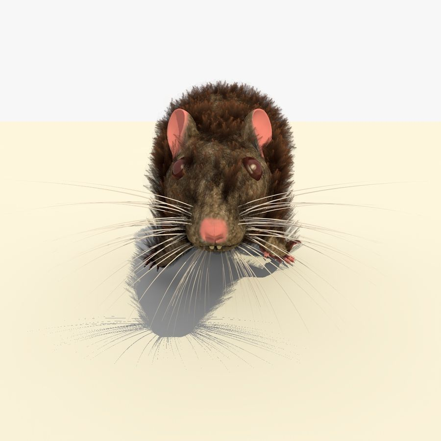 Animated Running Brown Mouse royalty-free 3d model - Preview no. 8