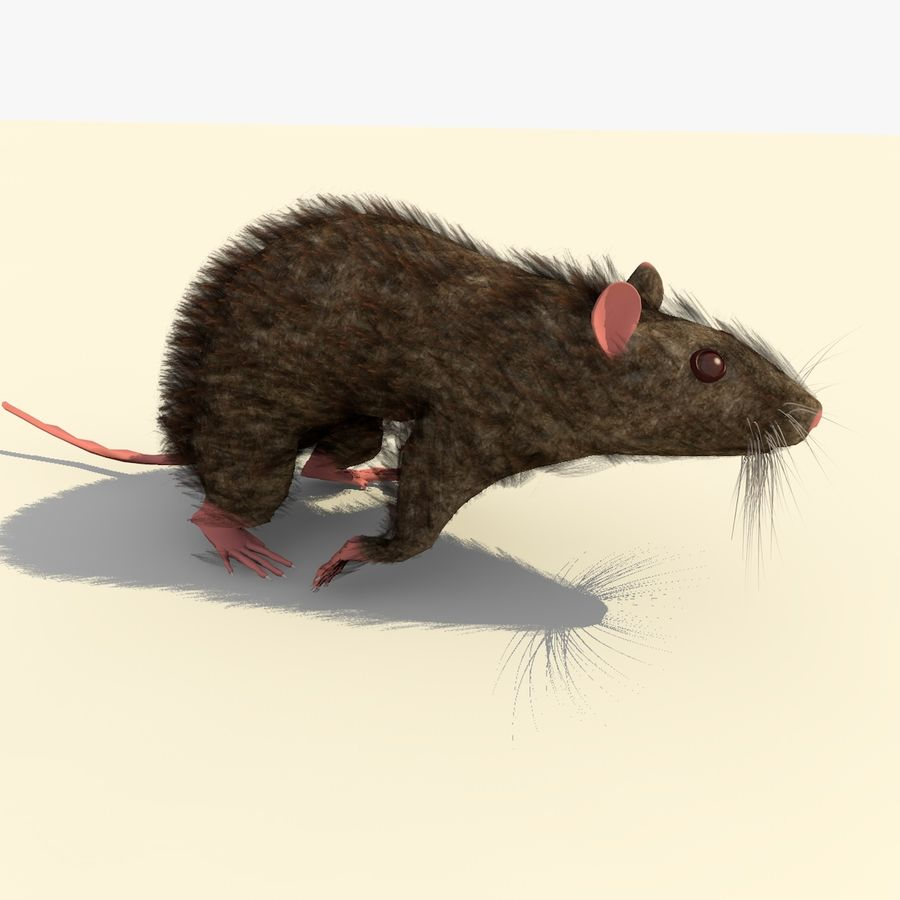 Animated Running Brown Mouse royalty-free 3d model - Preview no. 6