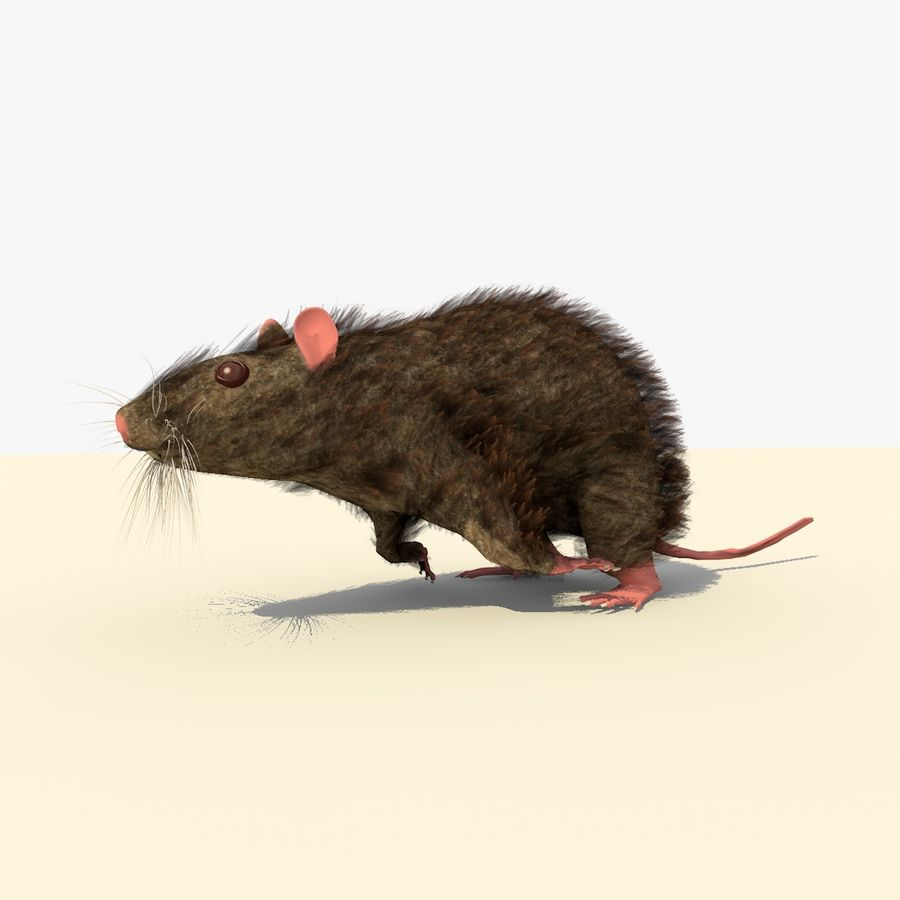 Animated Running Brown Mouse royalty-free 3d model - Preview no. 3