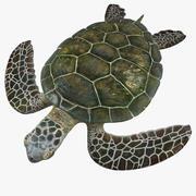 绿海龟 3d model