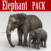 Pack éléphant 3d model