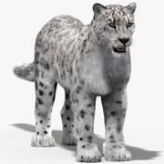 Snow Leopard (Fur) 3d model