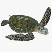 Sea Turtle Pose 3 3d model