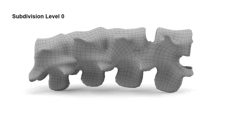 Animal Spine royalty-free 3d model - Preview no. 8
