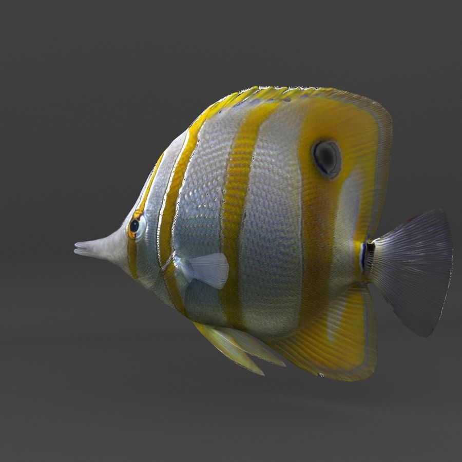 coral reef and fishes royalty-free 3d model - Preview no. 51