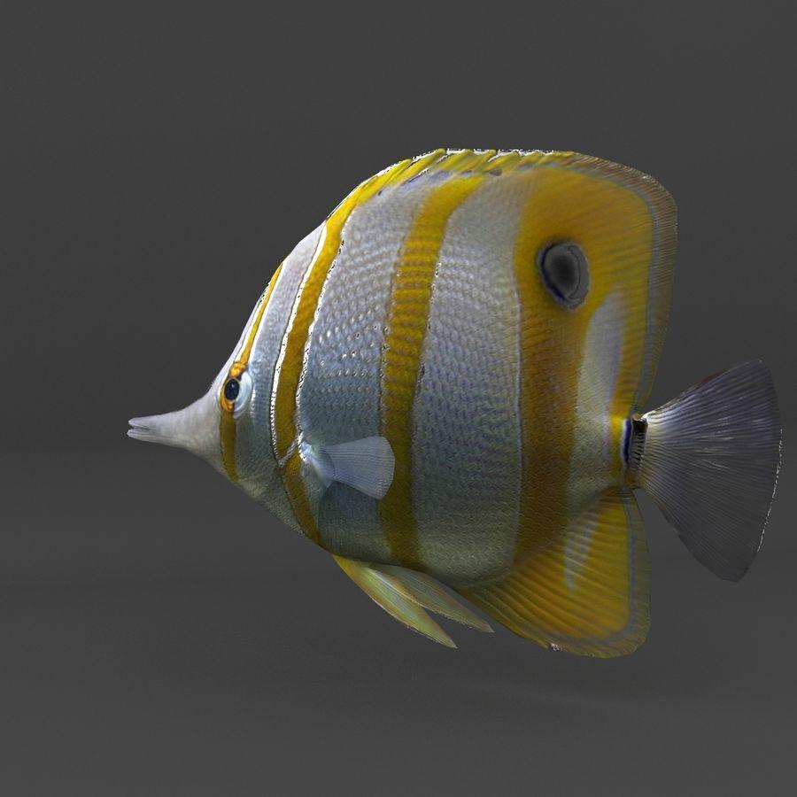 koraalrif en vissen royalty-free 3d model - Preview no. 51
