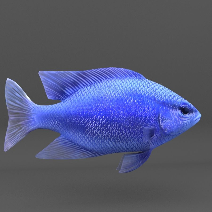 coral reef and fishes royalty-free 3d model - Preview no. 65