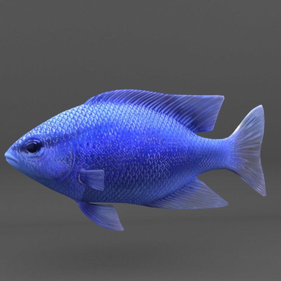 koraalrif en vissen royalty-free 3d model - Preview no. 82