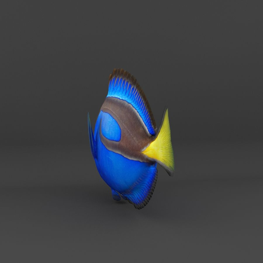 coral reef and fishes royalty-free 3d model - Preview no. 14