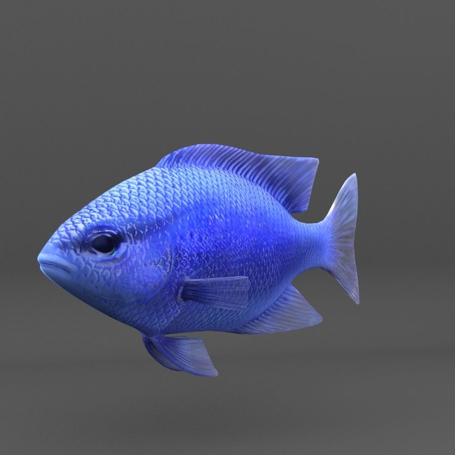coral reef and fishes royalty-free 3d model - Preview no. 84