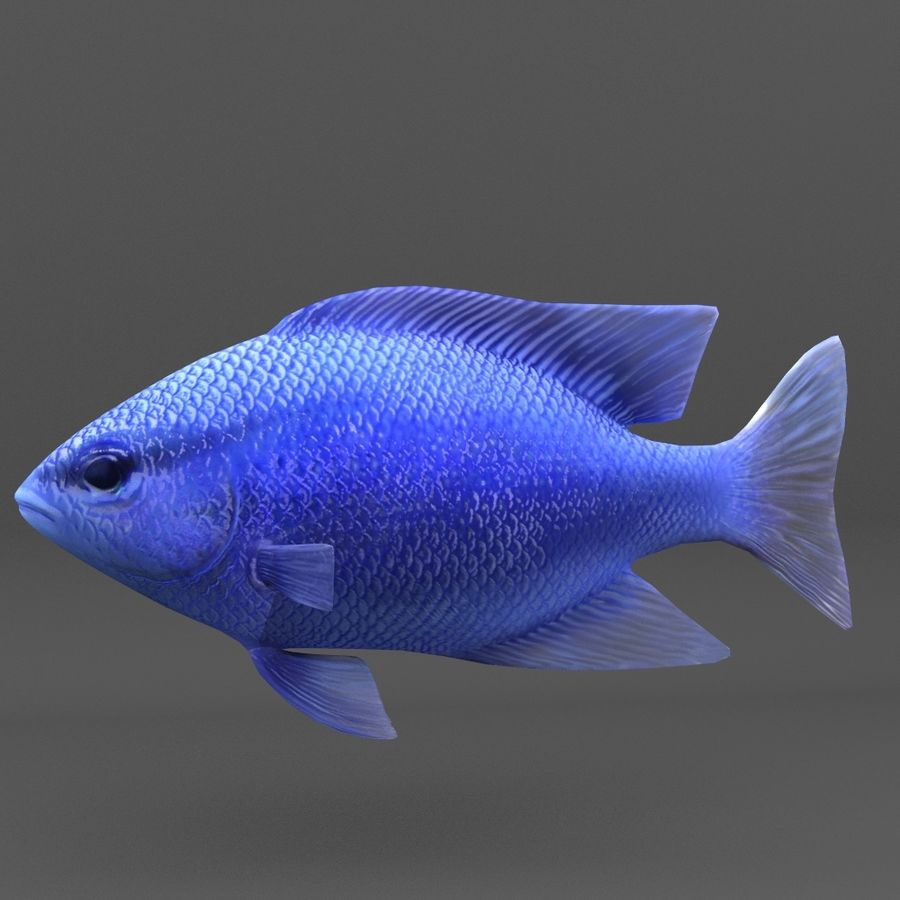 coral reef and fishes royalty-free 3d model - Preview no. 82