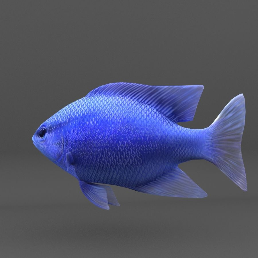 coral reef and fishes royalty-free 3d model - Preview no. 79