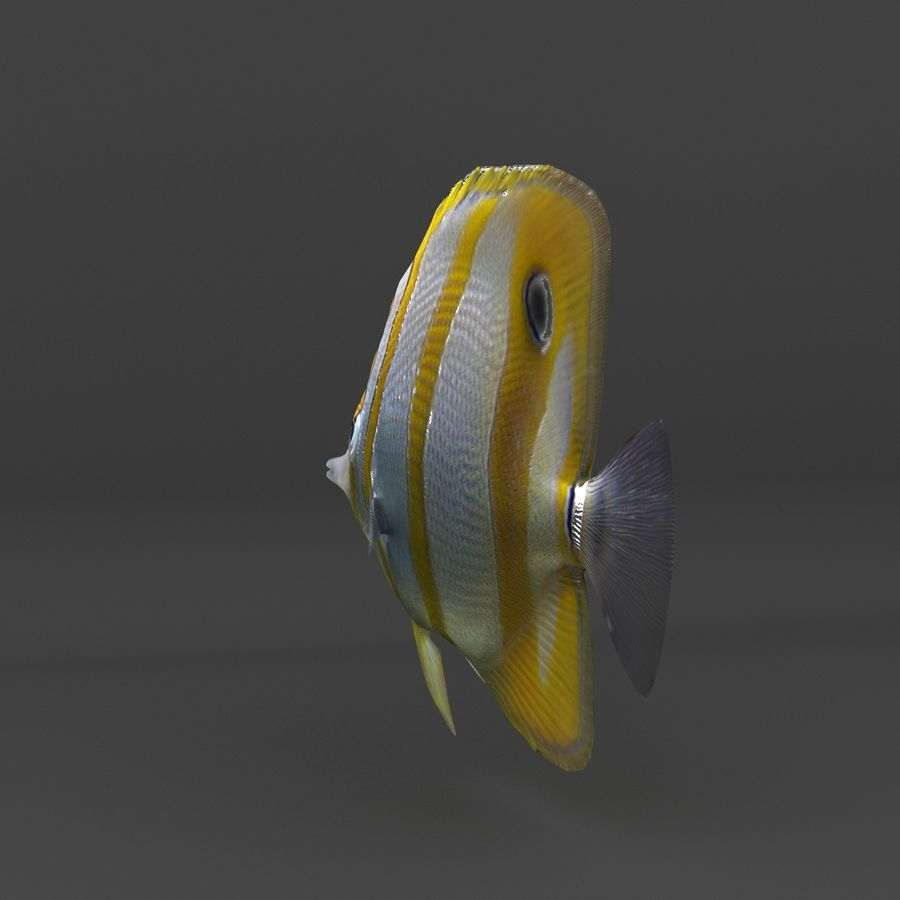 coral reef and fishes royalty-free 3d model - Preview no. 48