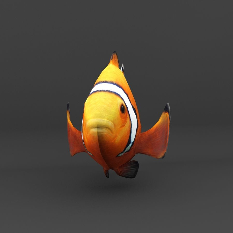 coral reef and fishes royalty-free 3d model - Preview no. 47