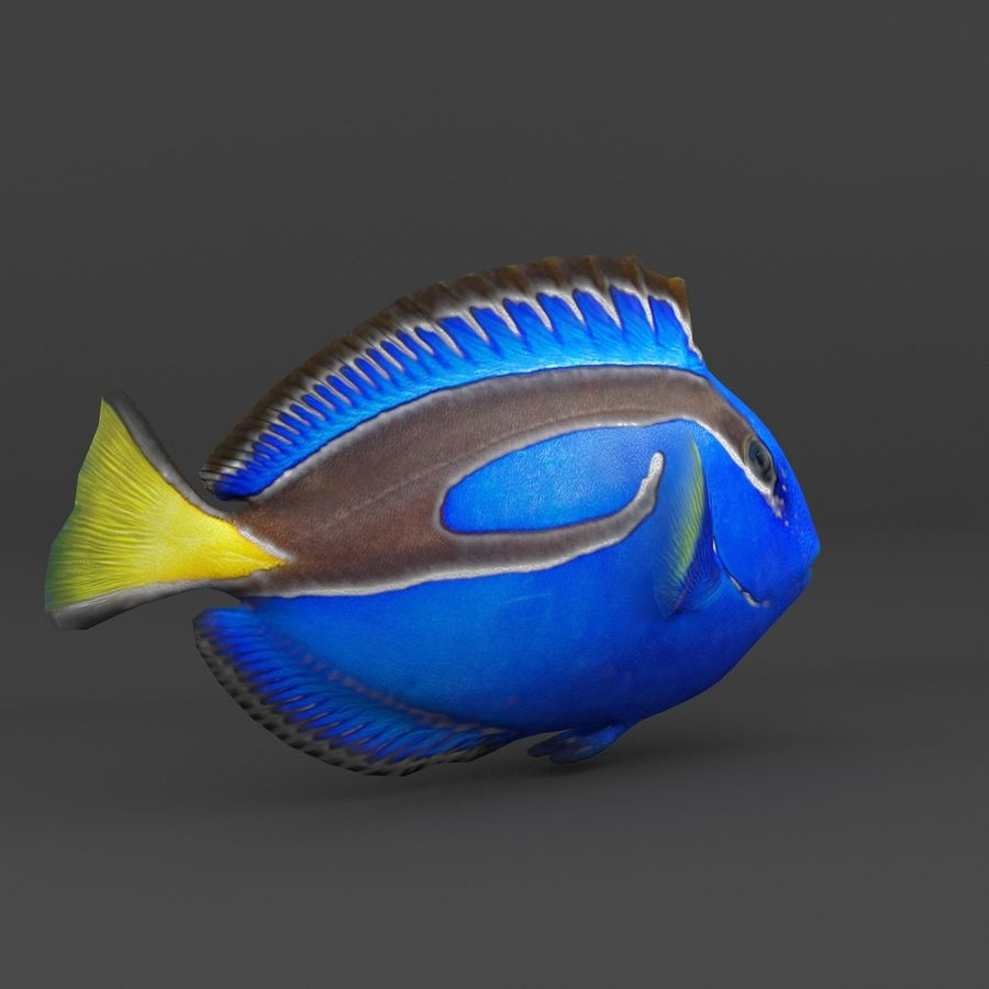 coral reef and fishes royalty-free 3d model - Preview no. 11