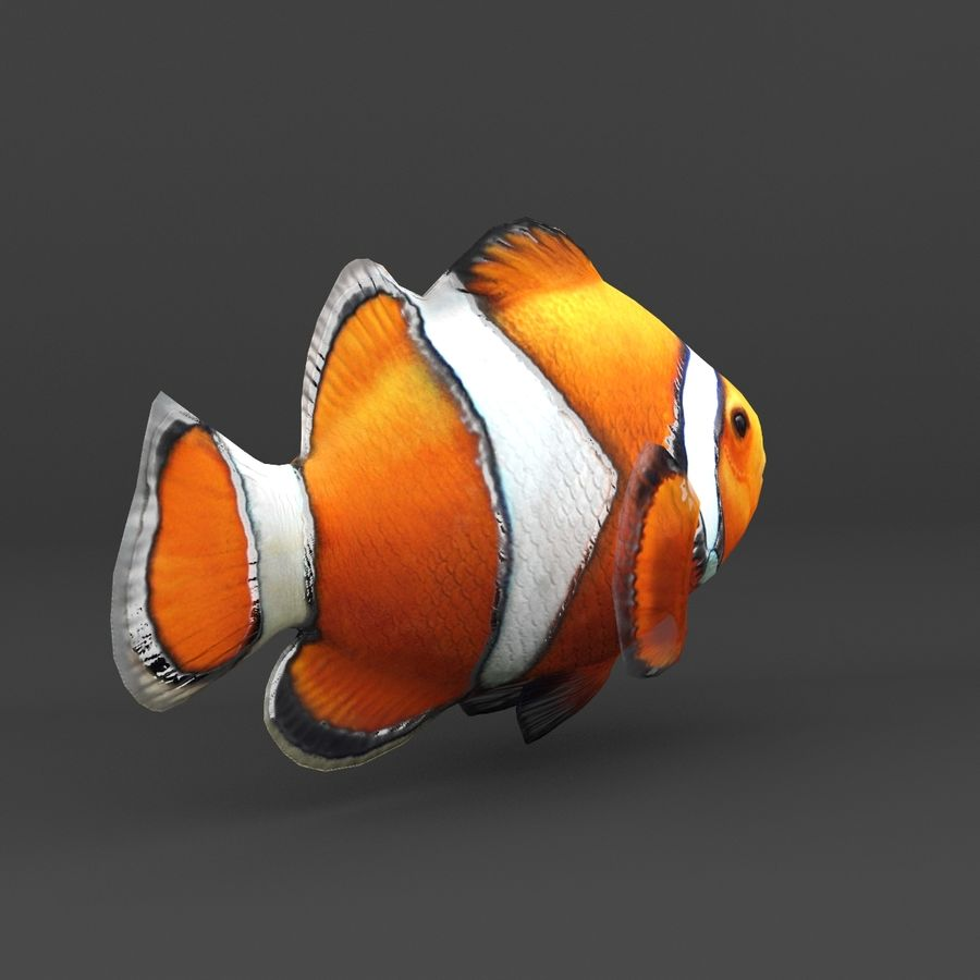 coral reef and fishes royalty-free 3d model - Preview no. 28