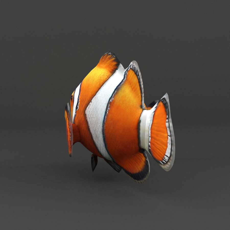 coral reef and fishes royalty-free 3d model - Preview no. 34