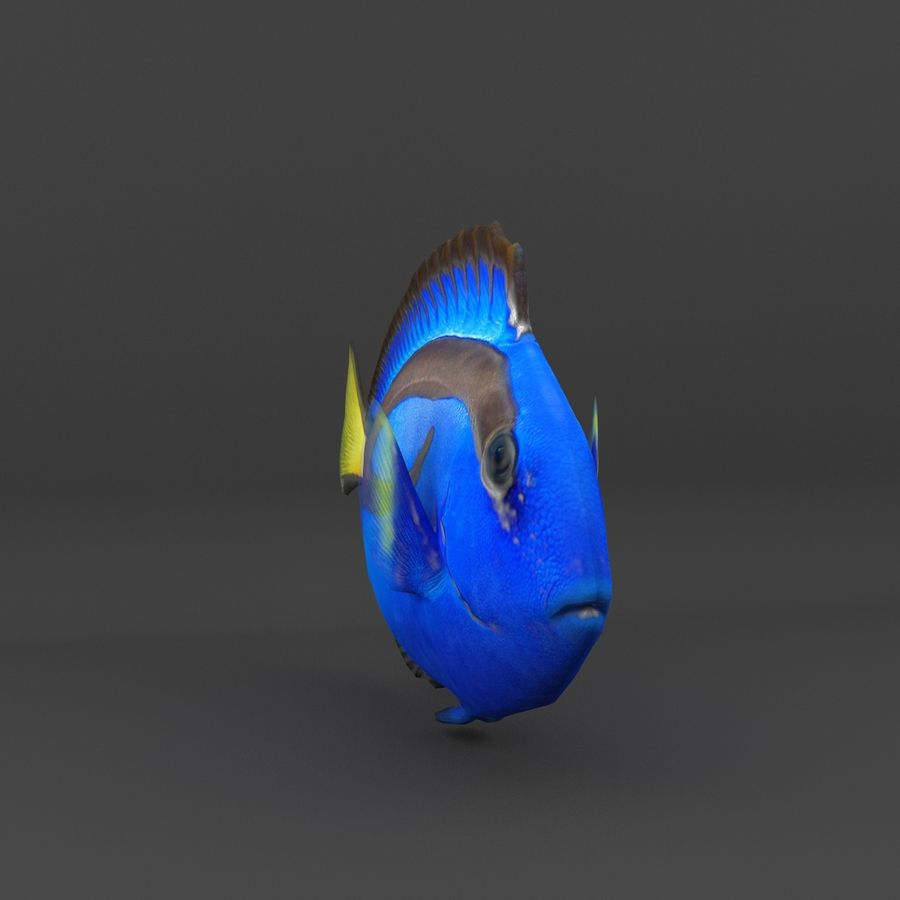 coral reef and fishes royalty-free 3d model - Preview no. 27