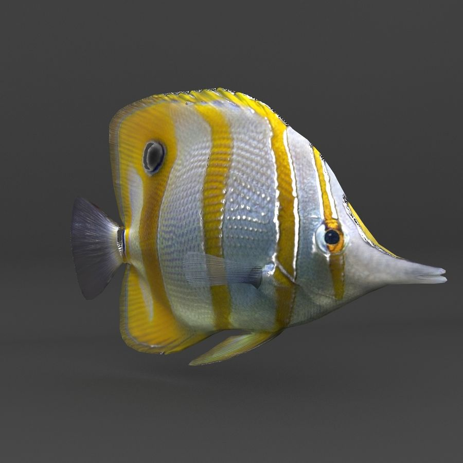 coral reef and fishes royalty-free 3d model - Preview no. 36