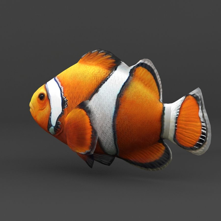 coral reef and fishes royalty-free 3d model - Preview no. 38