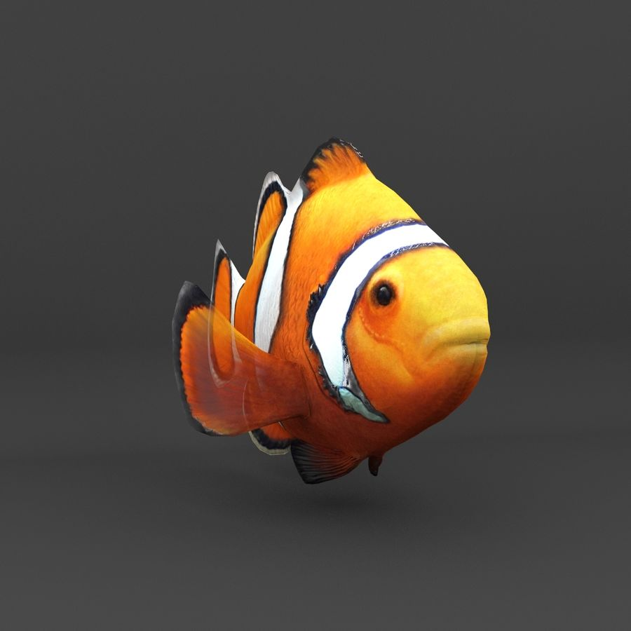 coral reef and fishes royalty-free 3d model - Preview no. 50