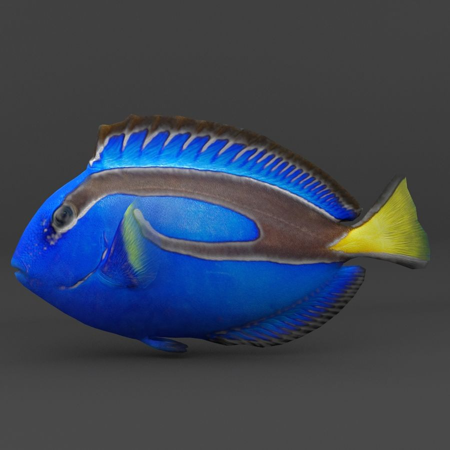 coral reef and fishes royalty-free 3d model - Preview no. 19