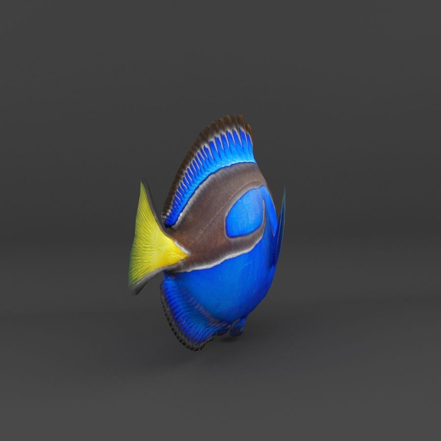 coral reef and fishes royalty-free 3d model - Preview no. 13