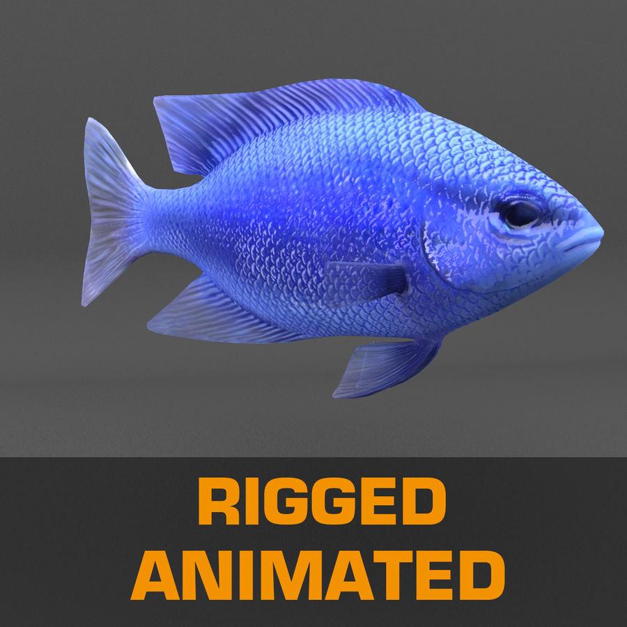 koraalrif en vissen royalty-free 3d model - Preview no. 91