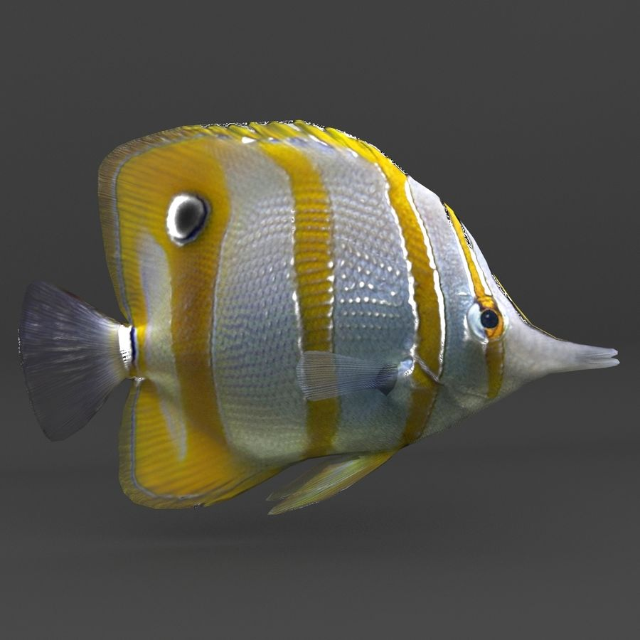 coral reef and fishes royalty-free 3d model - Preview no. 39