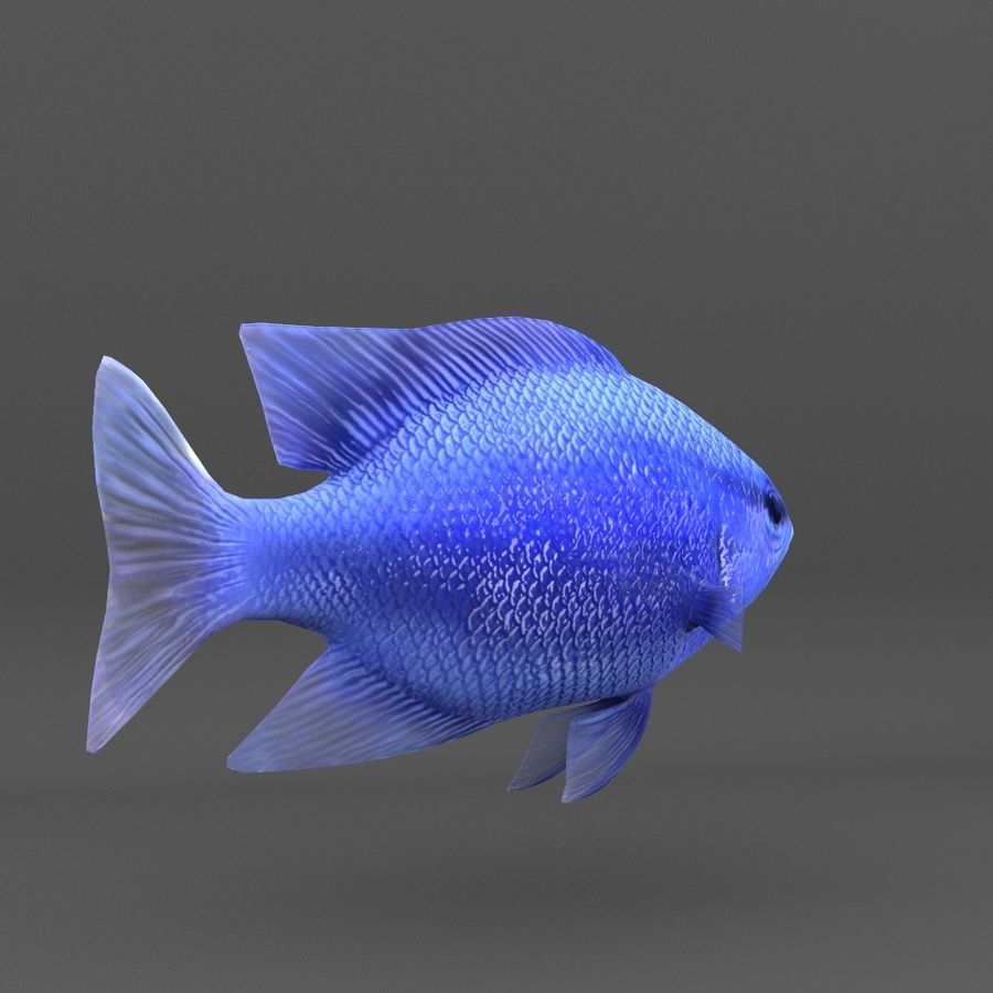 coral reef and fishes royalty-free 3d model - Preview no. 69