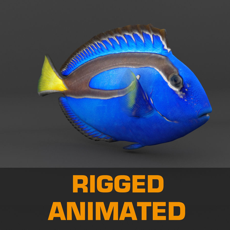 coral reef and fishes royalty-free 3d model - Preview no. 29