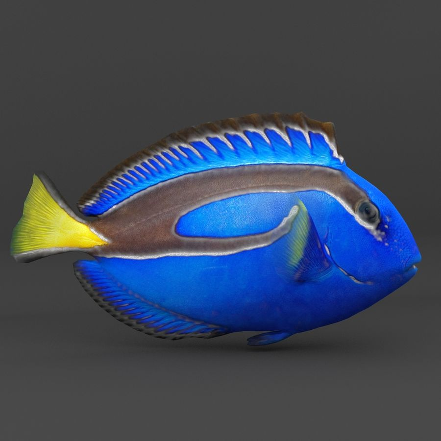 coral reef and fishes royalty-free 3d model - Preview no. 10