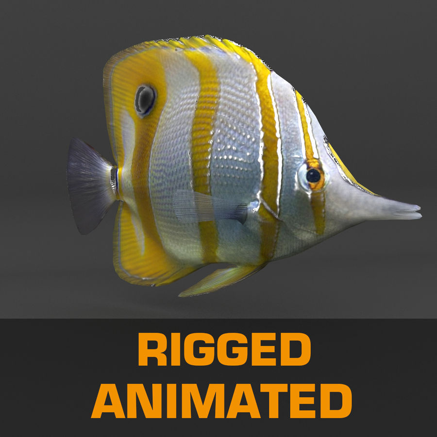 coral reef and fishes royalty-free 3d model - Preview no. 72